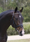 Horses Unlimited Dressage Horses For Sale Hanoverians